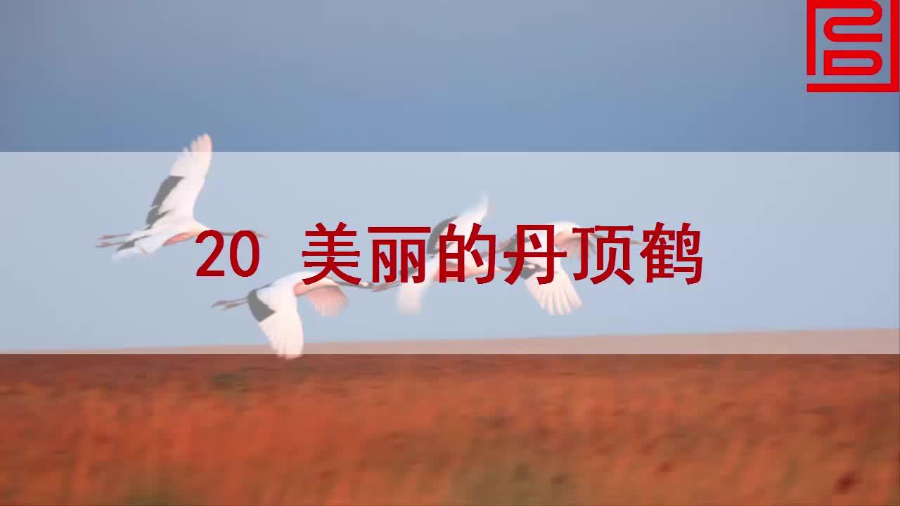 苏教版语文二年级上册第20课《美丽的丹顶鹤》mp4课文朗读.mp4