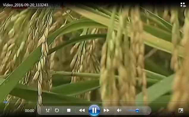 湘教版地理八年级上册4.1《农业》视频素材.wmv
