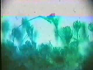人教版生物八年级上册《生殖》wmv视频素材.wmv