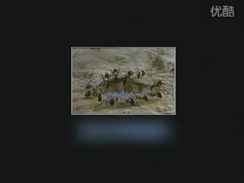 人教版生物八年级上册《昆虫与节肢动物》flv视频素材.flv