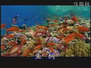 人教版生物八年级上册《多种多样的鱼》flv视频素材.flv