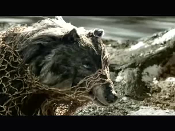 湘艺版音乐九下第五单元《猎人合唱》猎人.mp4