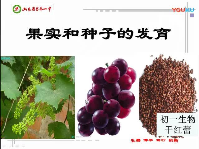 浙教版科学七下12.《果实和种子的发育》标清.mp4