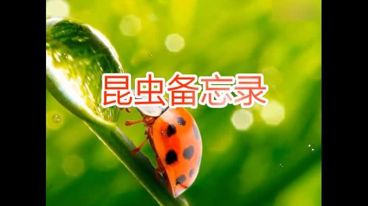 《昆虫备忘录》朗读动画.mp4